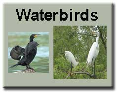 Waterbirds
