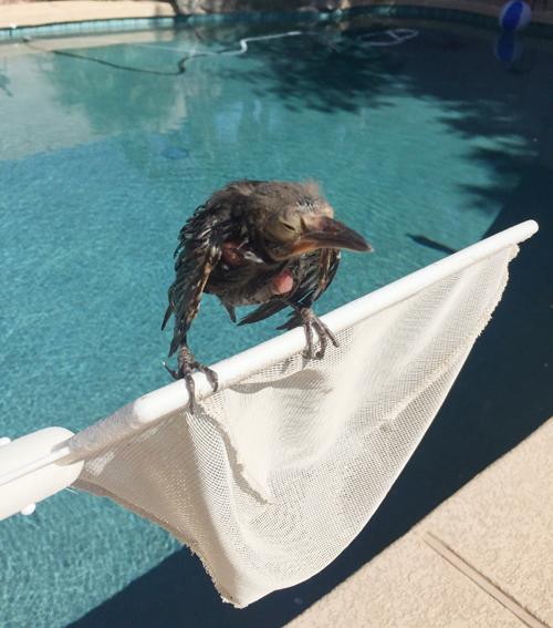 Found a Baby Bird