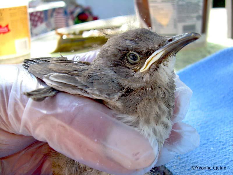 Types of baby birds - photo#4